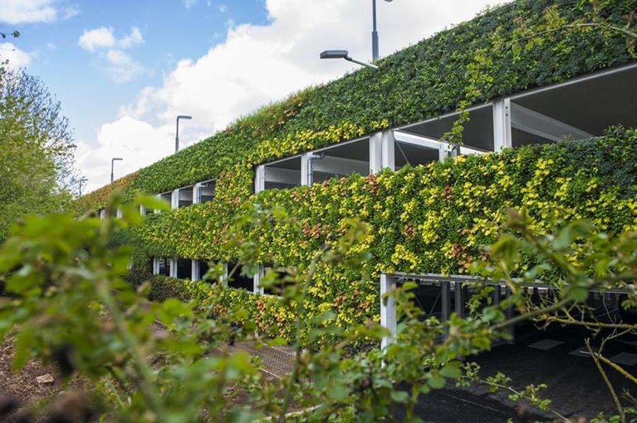 توصیف دیوارهای سبز